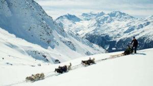 man and husky sledding on the mountain