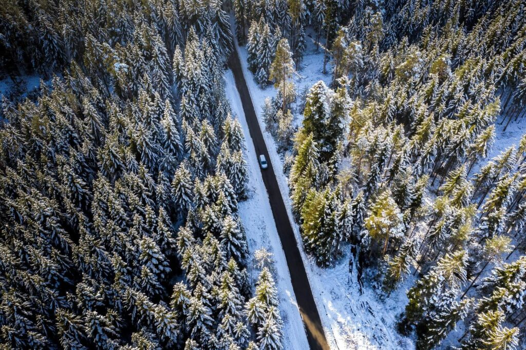 Road in the woods during winter